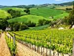 Export Abruzzo: i vini tengono, male l'industria