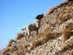 Ritrovato il cane smarrito sul Gran Sasso