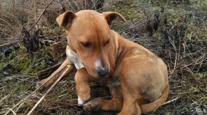Trovata una cucciola a Monticchio