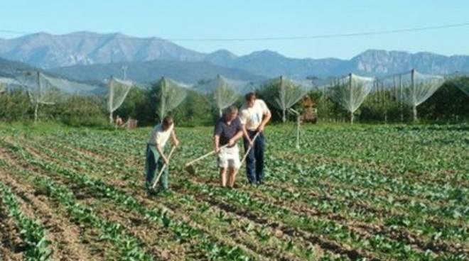 Agricoltura: «Agevolazioni per aziende colpite dal sisma»