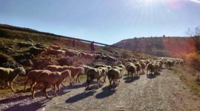 AquiLANA, felicità è un allevamento di pecore e lana