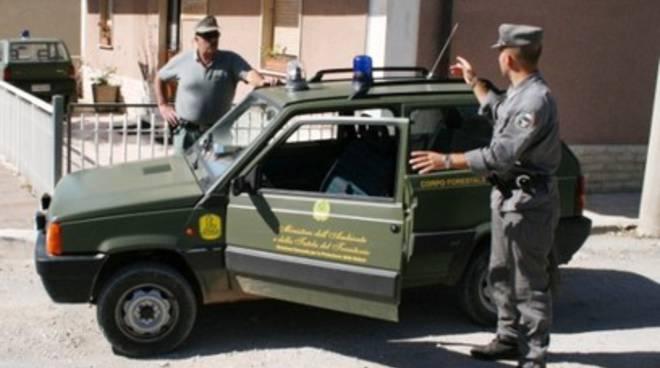 Cagnolini gettati da dirupo a Balsorano, «Una barbarie»