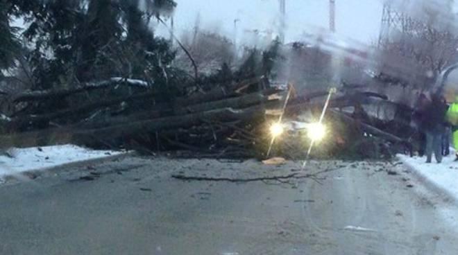 Neve e gelo, un albero cade a Santa Barbara