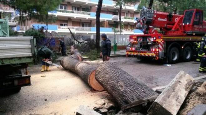 Allarme vento, alberi su case e automobili