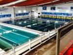 Avezzano regina del Nuoto, tutti in piscina da tutta Italia