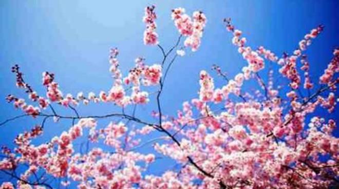 Eclissi conclusa, il primo saluto alla Primavera