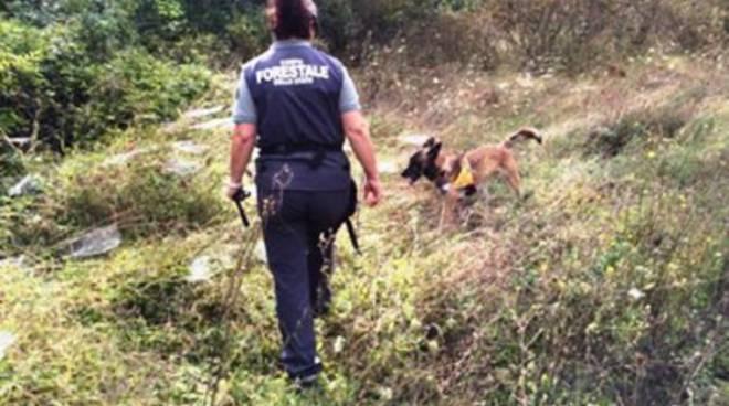 Bocconi avvelenati a Scoppito, Forestale salva cane