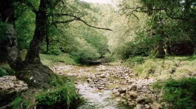 Boschi e Foreste in second'ordine per D'Alfonso