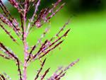 Combattere dissesto idrogeologico con una pianta? In Abruzzo si può