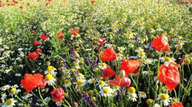 Il Parco della Majella firma la 'guida delle erbe'