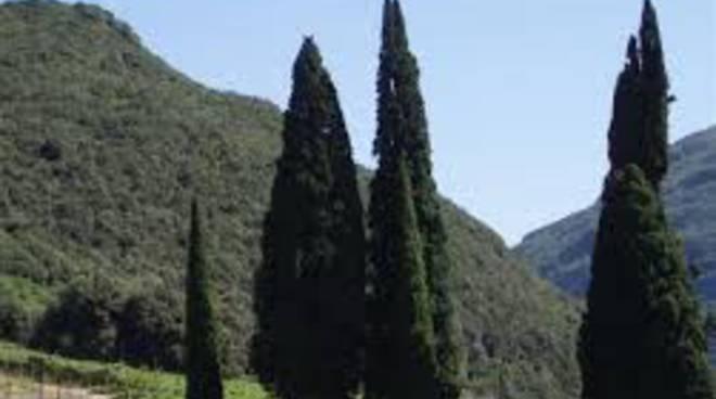 L'Aquila, 30 nuovi cipressi davanti al cimitero
