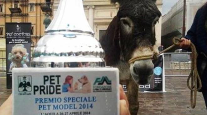 L'Aquila, tutto pronto per il Pet Pride 2015