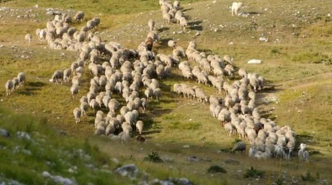 La lana del Gran Sasso al top