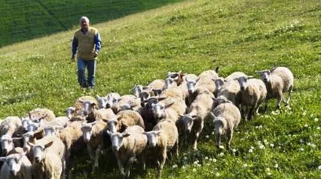 Pascoli, a Pescina la delibera che difende gli allevatori