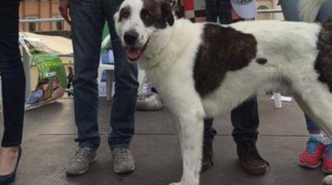 Pet Pride, boom di presenze in Piazza Duomo