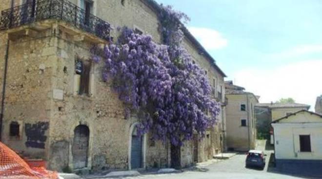 San Demetrio e il glicine secolare, uno spettacolo da salvare