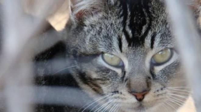 Strage di gatti a Tagliacozzo, Forestale apre inchiesta
