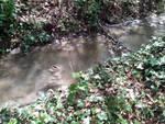 Un ruscello di 'sporcizie' nel fiume Aterno