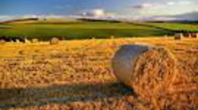 Agricoltura: Ok a nuove richieste per indennità compensativa