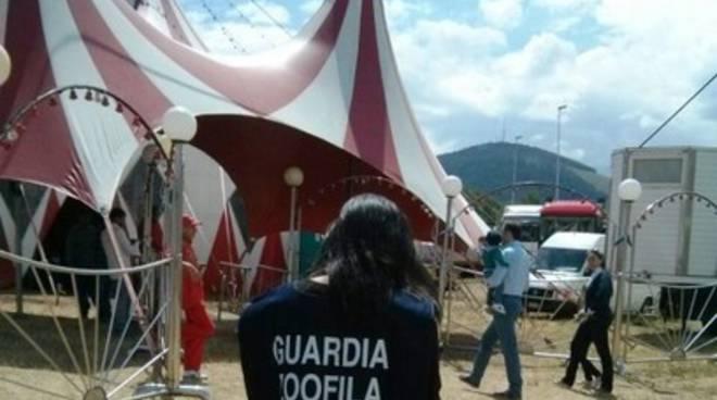 Circo Orfei a L'Aquila, sopralluogo della Lega del Cane