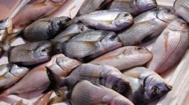 Coldiretti +454% frodi pesce, da sbiancante a doping