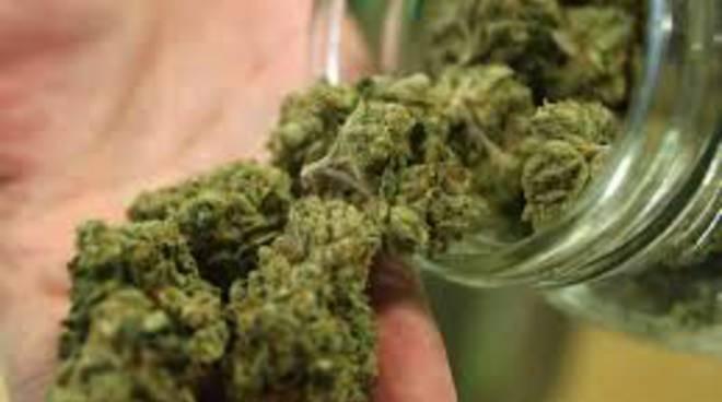 Coltivava marijuana, arrestato postino a Tornimparte