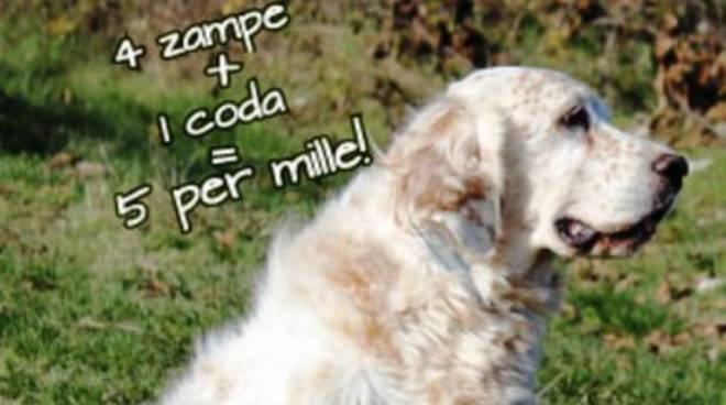 Lega del Cane L'Aquila: «Aiutateci ad accudire i cani anziani»