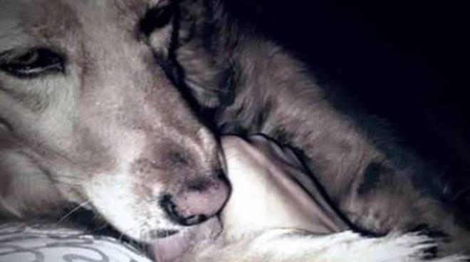 Aiutiamo Lea, la cagnolina che ama i bambini