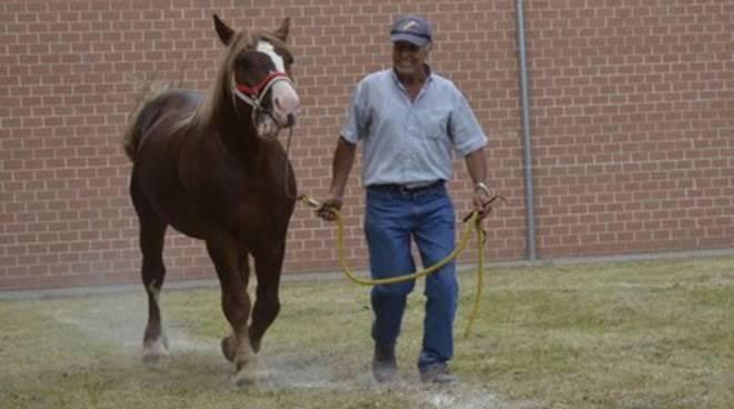 Cavalli aquilani protagonisti a Teramo