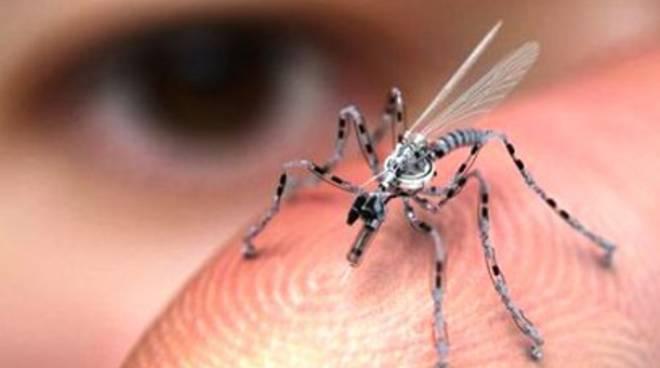 Estate, in Abruzzo è allarme zanzara tigre