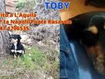 L'Aquila, si è smarrito Toby