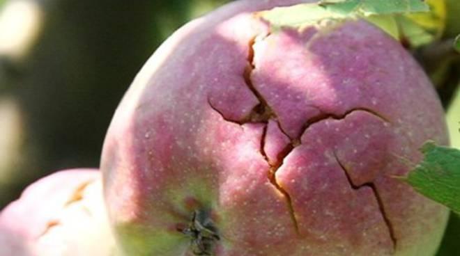 Maltempo, Coldiretti: danni gravi alla frutta italiana