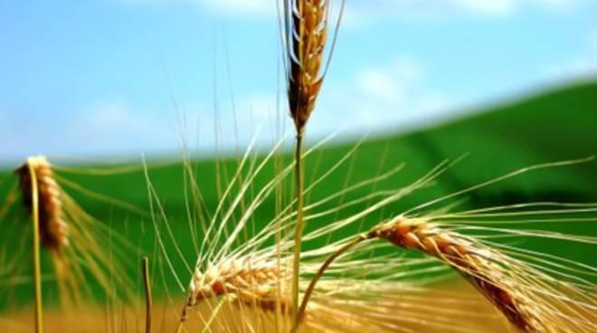 Ristrutturazione agricoltura, Febbo: «Un disastro»