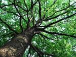 Taglio alberi 'maldestro', lapidi danneggiate a Montereale