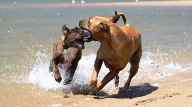 A Roseto spiagge aperte a cani e gatti
