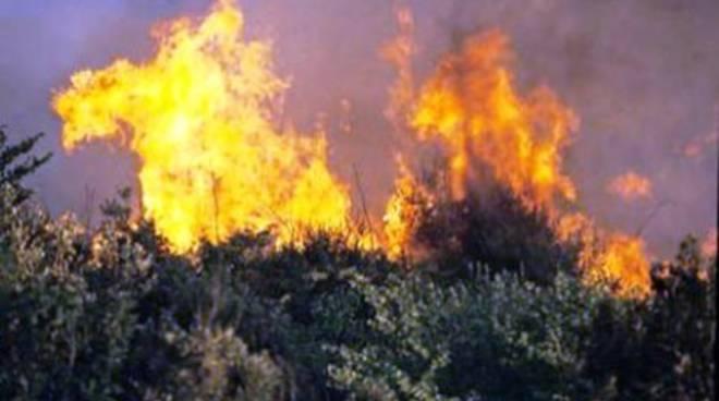 Incendi: fiamme nel bosco a Torricella Sicura