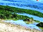 Invasione di alghe sulla riviera pescarese