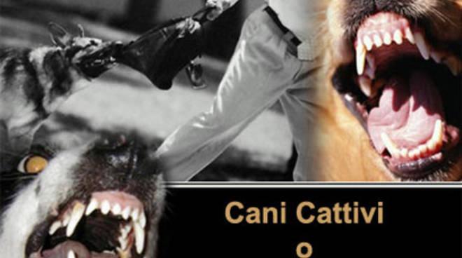 Sassa, emergenza aggressioni cani senza guinzaglio