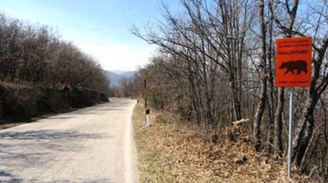 Strade del parco usate come piste per velocisti il for Cabina di montagna grande orso