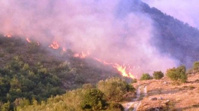 Fuoco a San Vincenzo Valle Roveto: morti 650 ulivi