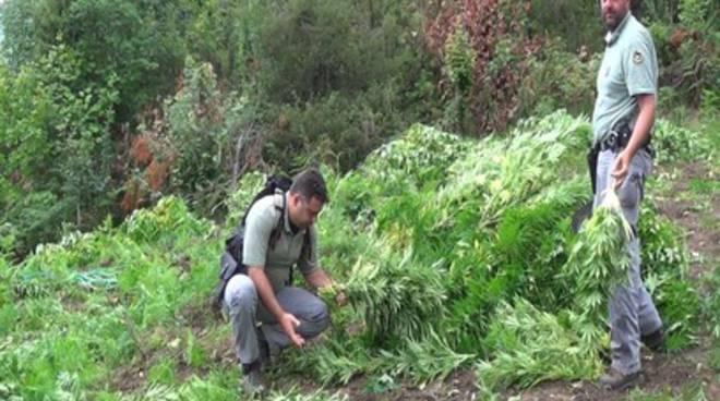 Parco Gran sasso, sequestrata una vasta piantagione di cannabis