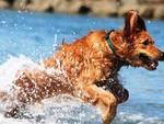 Pet-Therapy in spiaggia? Qualcosa si muove a L'Aquila