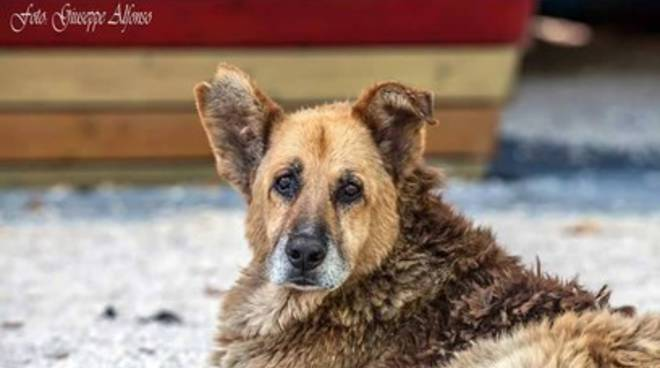 Pluto non sta bene, città in pensiero per il cane-simbolo dell'Aquila