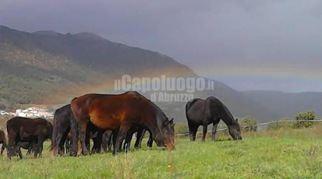 Incidente cavalli maremmani