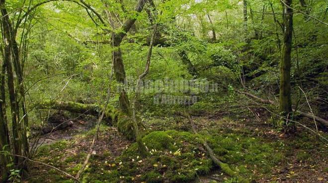 bosco oricola