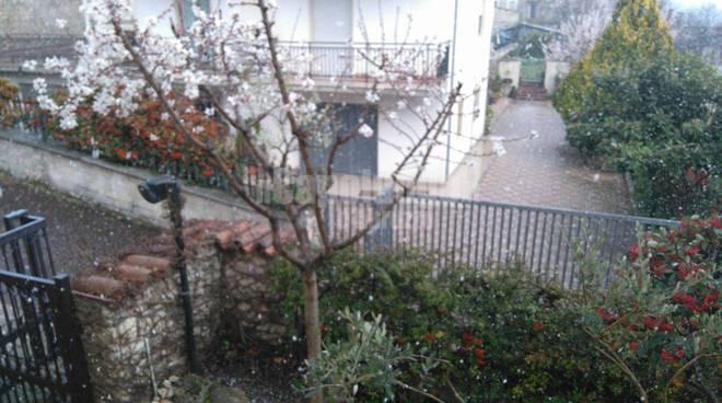 mandorli in fiore e neve