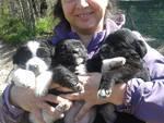 Pasqualina e i suoi cuccioli sul Gran Sasso