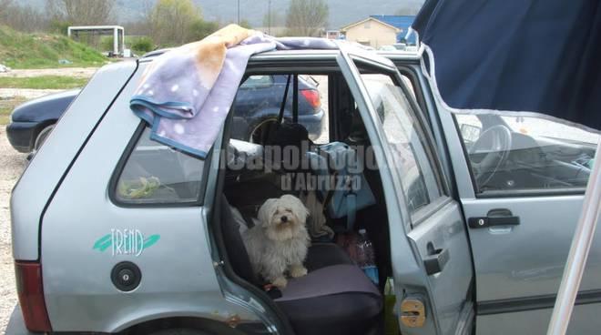 cesare, cane terremotato