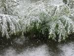 neve 25 aprile