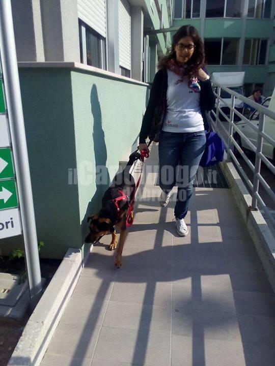 pet therapy e riabilitazione: tesi di studentessa fisioterapia